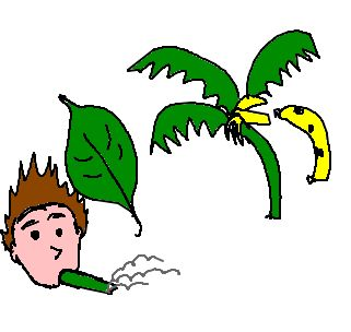 Folha De Bananeira